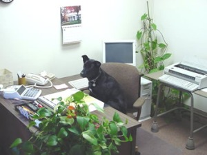 dog sitting in office chair in office