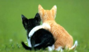 two kittens - friendship love