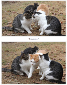 third-wheel cat